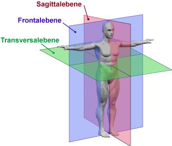 Körperachsen / Körperebenen